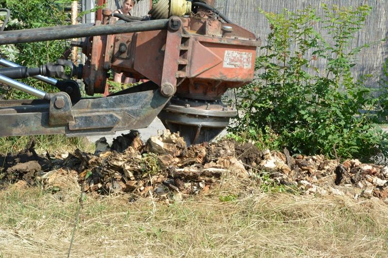 Kivágott nyárfák tuskóinak eltávolítása