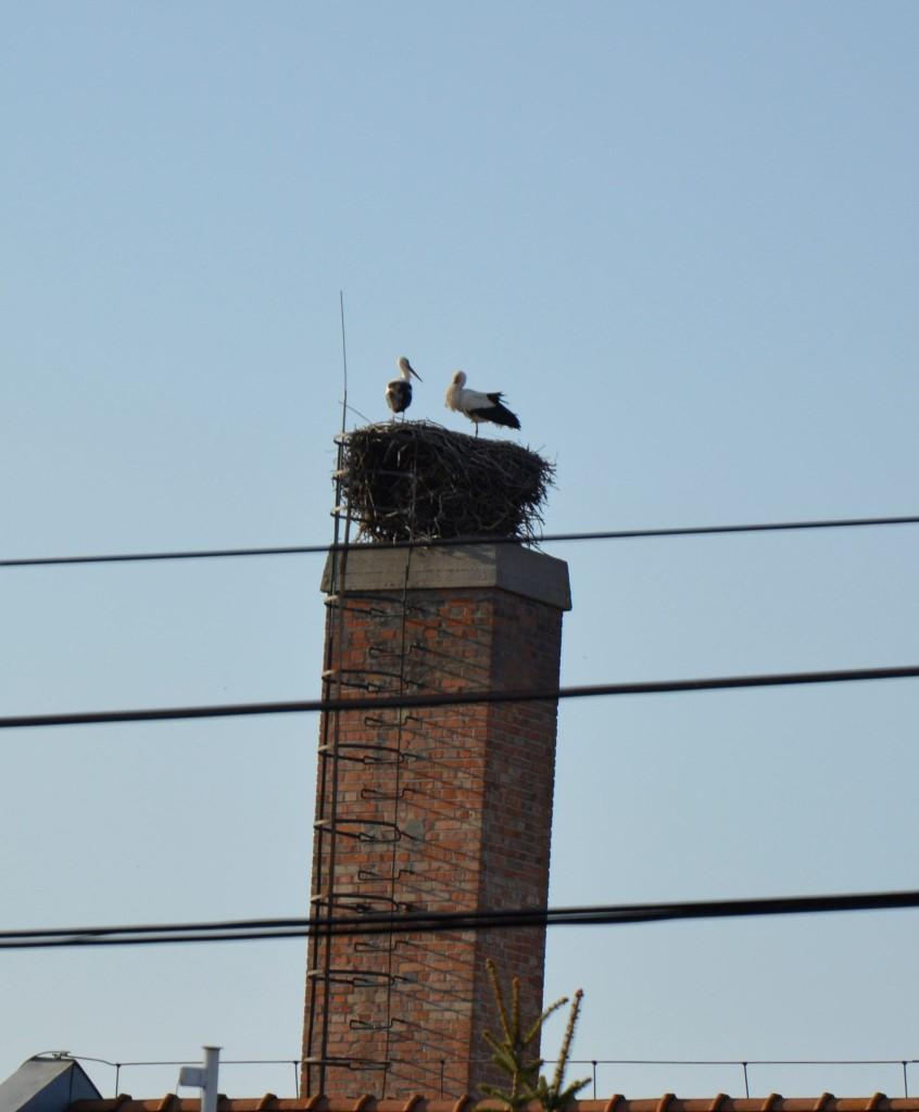 Megérkeztek a gólyák